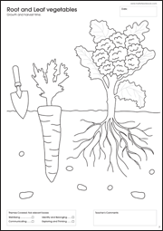 My First Activity Workbook - Root and Leaf Vegetables